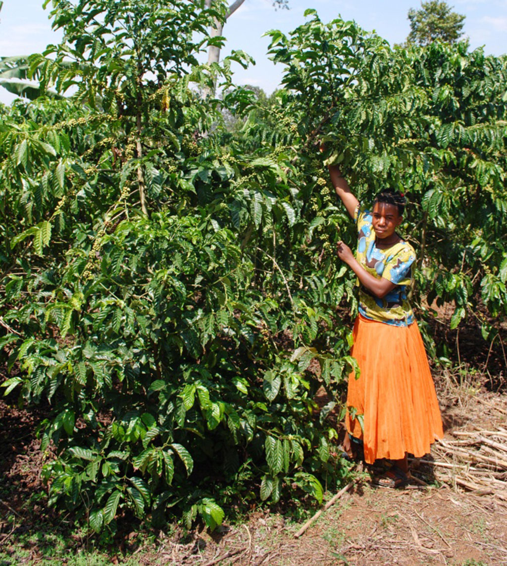 Nasamula in her coffee plantation.