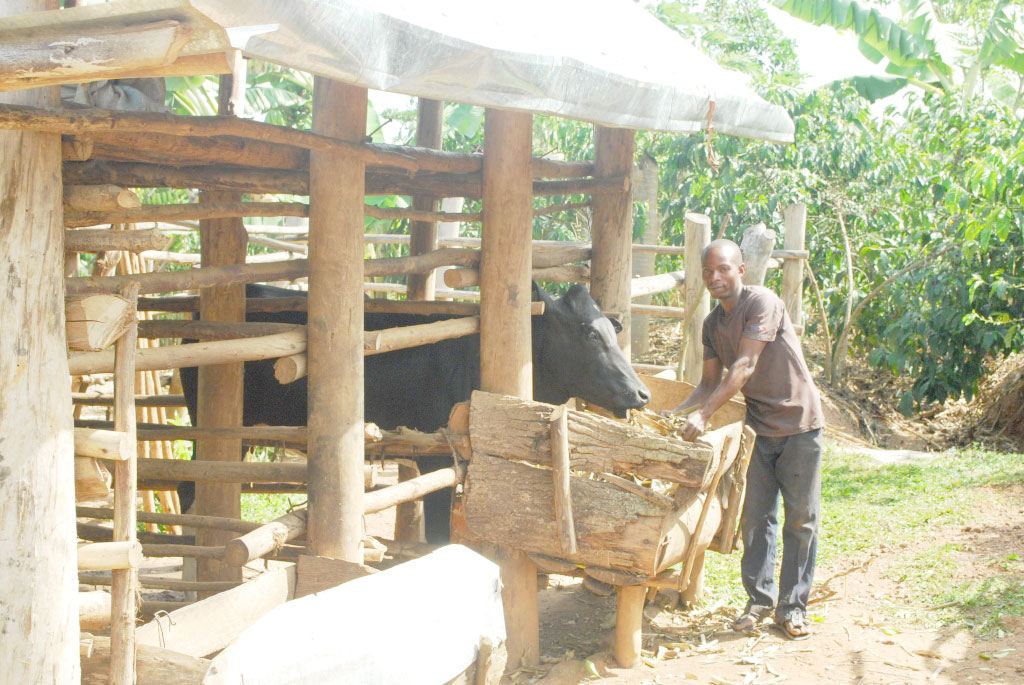 Sebowa,who looked after someone's cattle is now owning his ,courtesy of Kitovu Mobile.