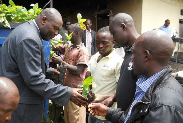 Former Masaka District Chairman, Joseph Kalungi (left) distributes coffee seedlings to young farmers. PHOTO BY MICHAEL J. SSALI