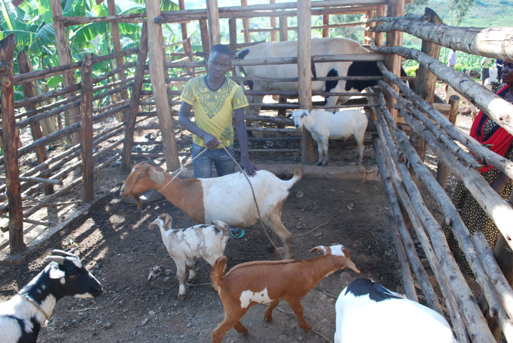 Happy. Shows off his goat which he won during the farming competitions. He used his prizes as a stepping stone to boost his livelihood.