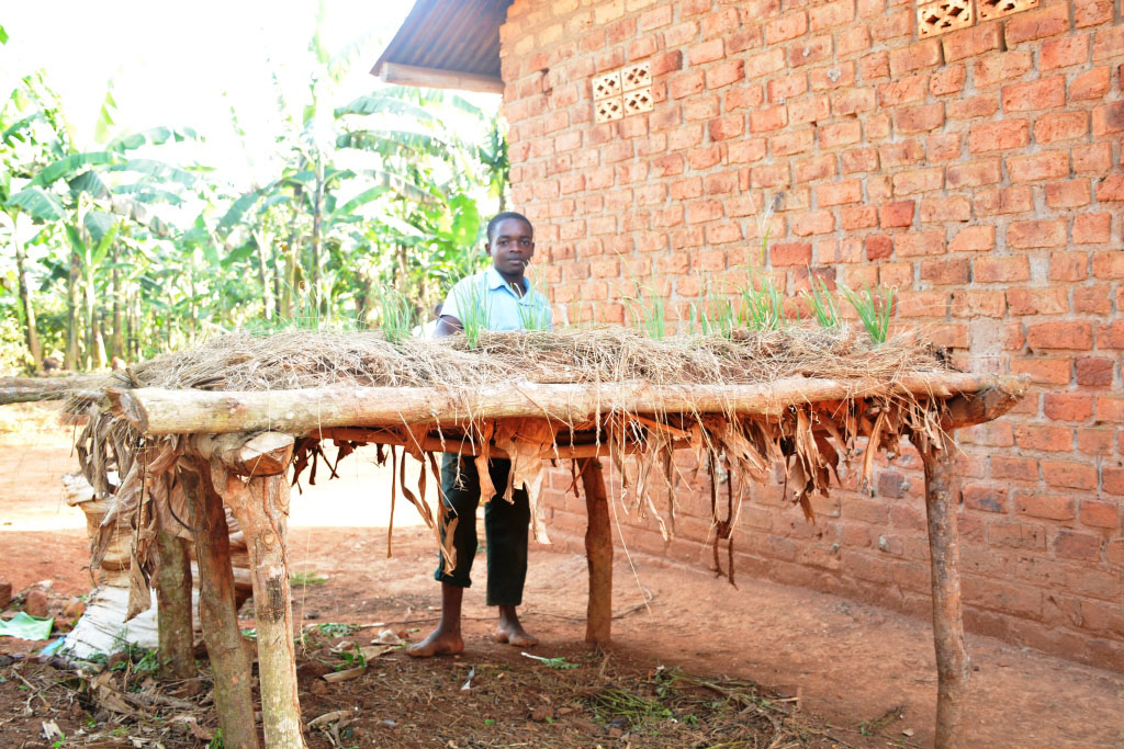 Mujjuzi's nursery bed raised to mitigate pests as learnt from farm school.