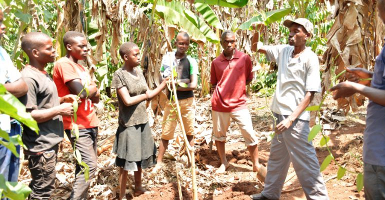 Trainees holding vanilla cuttings as Yiga shows them how to plant them and creep them on the supporting plants.
