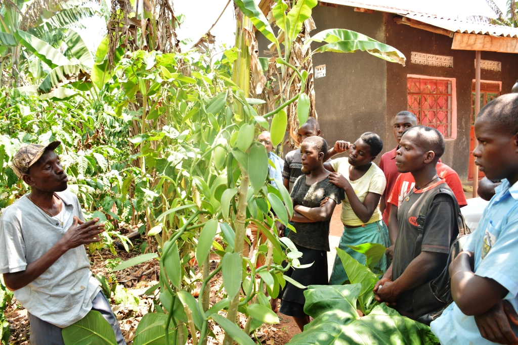 Yiga (wearing a cape) shows mobile farm s chool trainess attached to him a single vanilla crop that fetched him Shs 1 Million in just one harvest season. He encouraged trainees to embrace this cash crop. PHOTOS BY MOSES MUWULYA