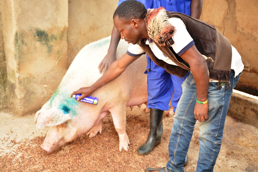 Keeya spreading wounded animal,Disease spread control.